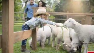 Iklan Dancow 1+ dengan Excelnutri+ edisi Ngasih Makan Domba