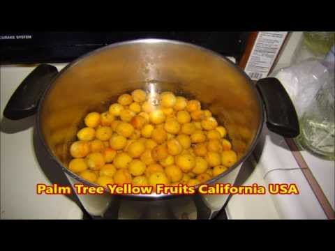 Palm Tree Yellow Fruits California Usa