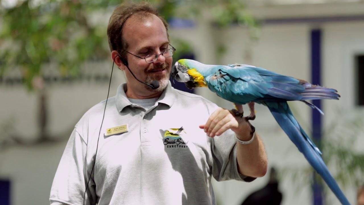 Wildlife Rehabilitation - Seaside Seabird Sanctuary, LLC