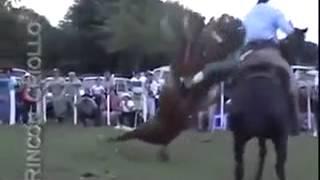 Domando cavalo