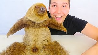 MY CUTE BABY SLOTH (Yes, She's Real)