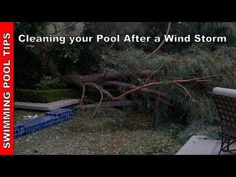 Cleaning Your Pool After a Wind Storm