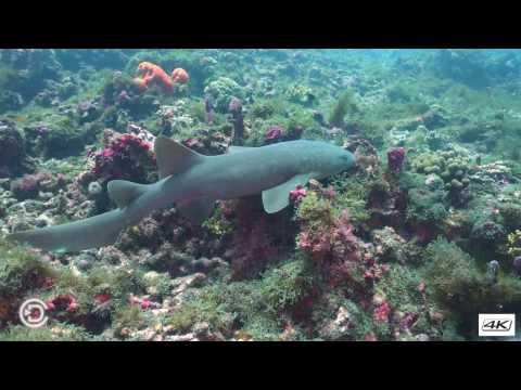 Diving Mayereau Gardens South - St Vincent