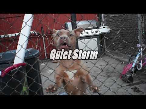 Badlandz Haz - Quite Storm freestyle (Music Video)