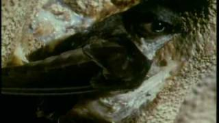 Planet Wild - Cave Swiftlets   Storyteller Media