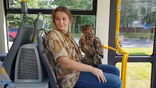 Филин в трамвае немножко со стороны