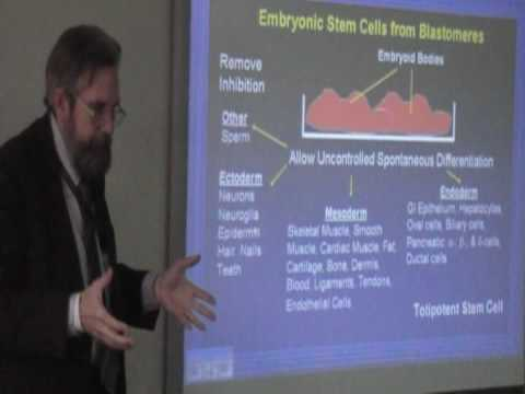 Adult vs. Embryonic Stem Cells, Dr. Henry Young  Politics and Policy Course, Dr. Michael Dean part 1