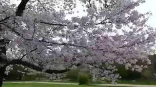 仁徳天皇陵と周辺(2015年4月6日) その他の動画 http://www.yout...
