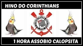 ASSOBIO CALOPSITA - HINO DO CORINTHIANS