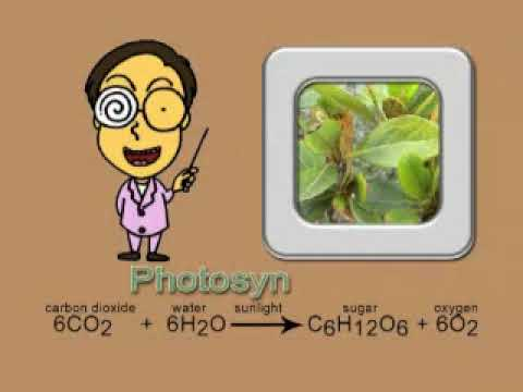Photosynthesis song new and complete version