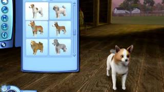 The Sims 3 Pets: Small Dog Breeds