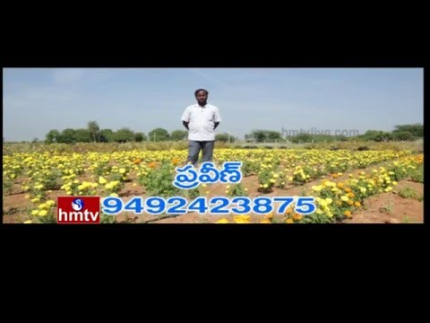 Natural Farming by Software Engineer Praveen Kumar | Nela Talli Weekend | 25-12-15 | HMTV