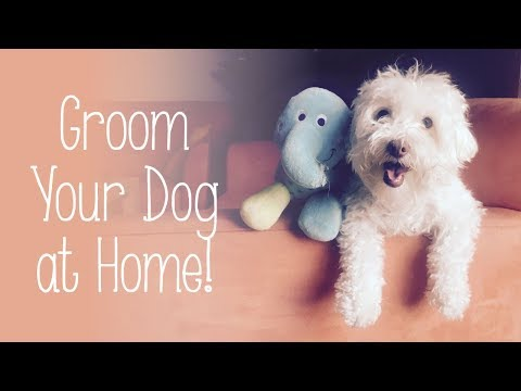 How to Groom Your Dog at Home - Maltese and Poodle Grooming - Cut Your Dog Hair