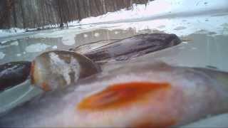 Ловля окуня в торфяных карьерах,зимой.Видео rybachil.ru