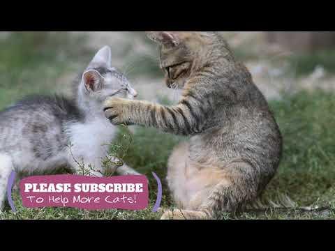 Sleeping Music for Kittens, Cat Sleep Music, 1 Hours Music  Make Cats Go to Sleep ☯LCZ04