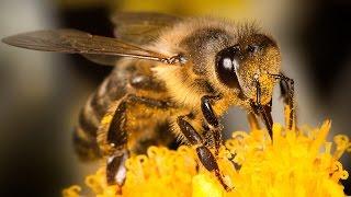 فيديو - شاهد حقائق مُدهشة عن الكائنات الأكثر تنظيماً.. النحل