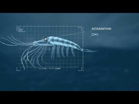 The Powerful Antarctic Krill