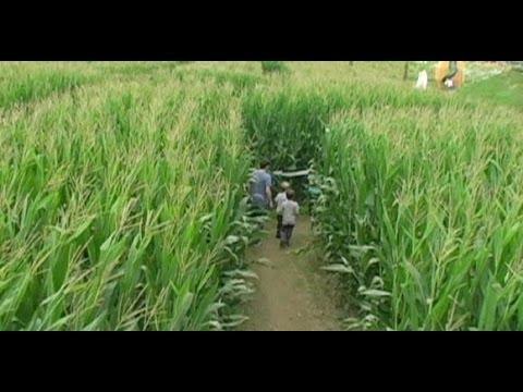 Corn Maze Long Island