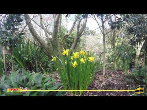 Tulip Festival At Eden Garden Auckland