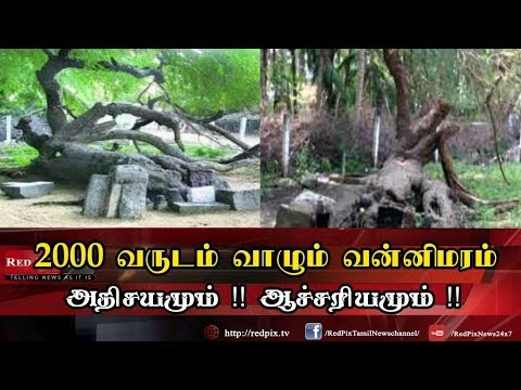 Top 10 Tourist Places to Visit in Thoothukudi | தூத்துக்குடி சுற்றுலா | TAMILNADU from YouTube · Duration:  3 minutes 13 seconds