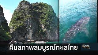 ฮือฮาอีก ปูลมกลับอ่าวมาหยา – ฉลามวาฬอวดโฉมทะเลพังงา | Springnews