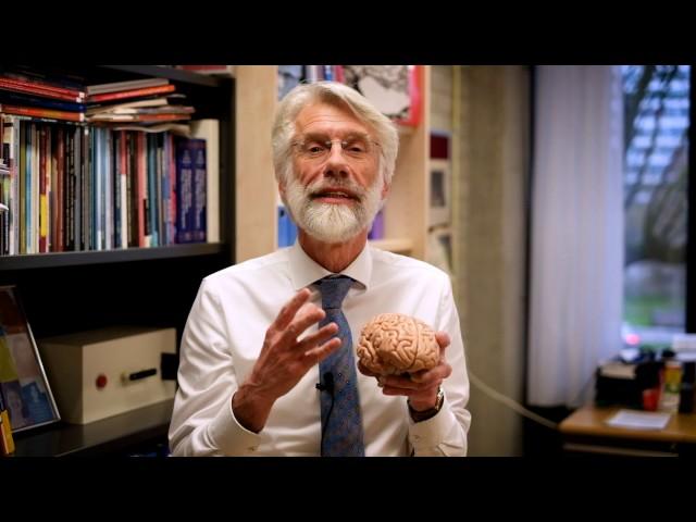 Waarom is wandelen goed voor je brein?