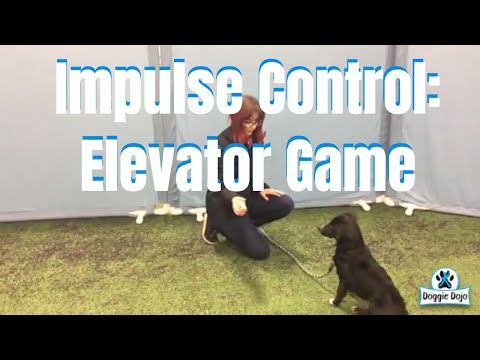 Train Your Dog Self Control with the Elevator Game - #MinWinDog