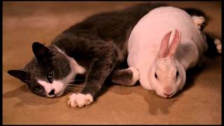 bunny and kitty full - unbreakable kimmy schmidt