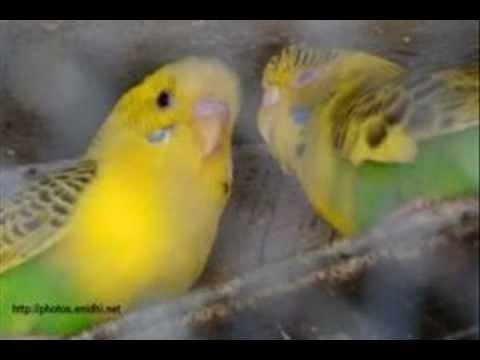 Sei Je Holud Pakhi Cactus Mp3 Free Downloadgolkes