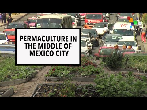 Permaculture in Mexico City
