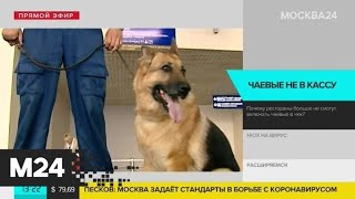 Служебные собаки будут вычислять зараженных коронавирусом россиян - Москва 24
