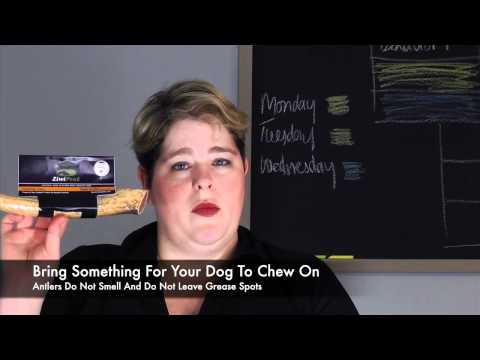 tips-for-traveling-with-a-service-dog---airplane-travel-tips---diabetes-migraines-alert