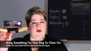 Tips For Traveling With A Service Dog - Airplane Travel Tips - Diabetes Migraines Alert