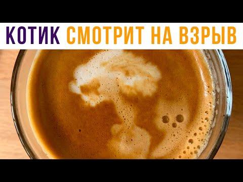 Сварил кофе, а там... | Приколы | Мемозг #464