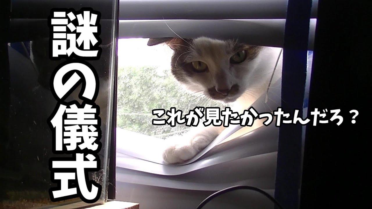 悪い顔で怪しい儀式をする猫