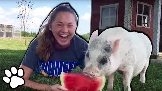 100 Funny Pets of September 2018   Try Not To Laugh Challenge