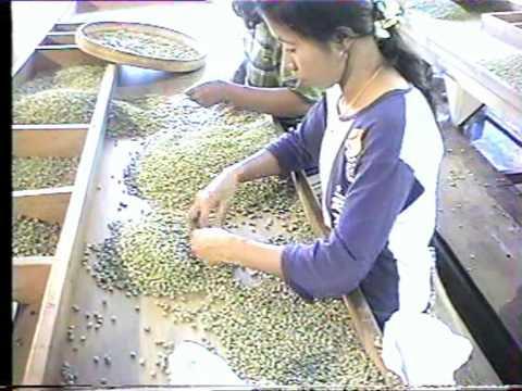 Moyens de transport et usine à café à Java