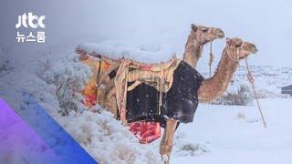 사하라사막 덮은 눈…영하에 담요 덮은 낙타 / JTBC 뉴스룸