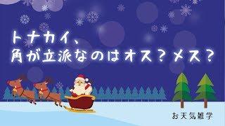 【お天気雑学】トナカイ、角が立派なのはオス?メス?