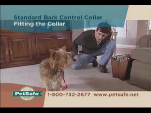 PetSafe Standard Bark Control Collar Tips