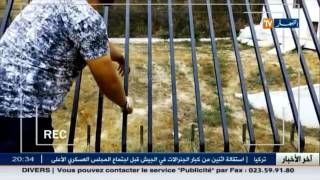 حديقة الحيوانات ببن عكنون..عنوان الإهمال و سوء التسيير