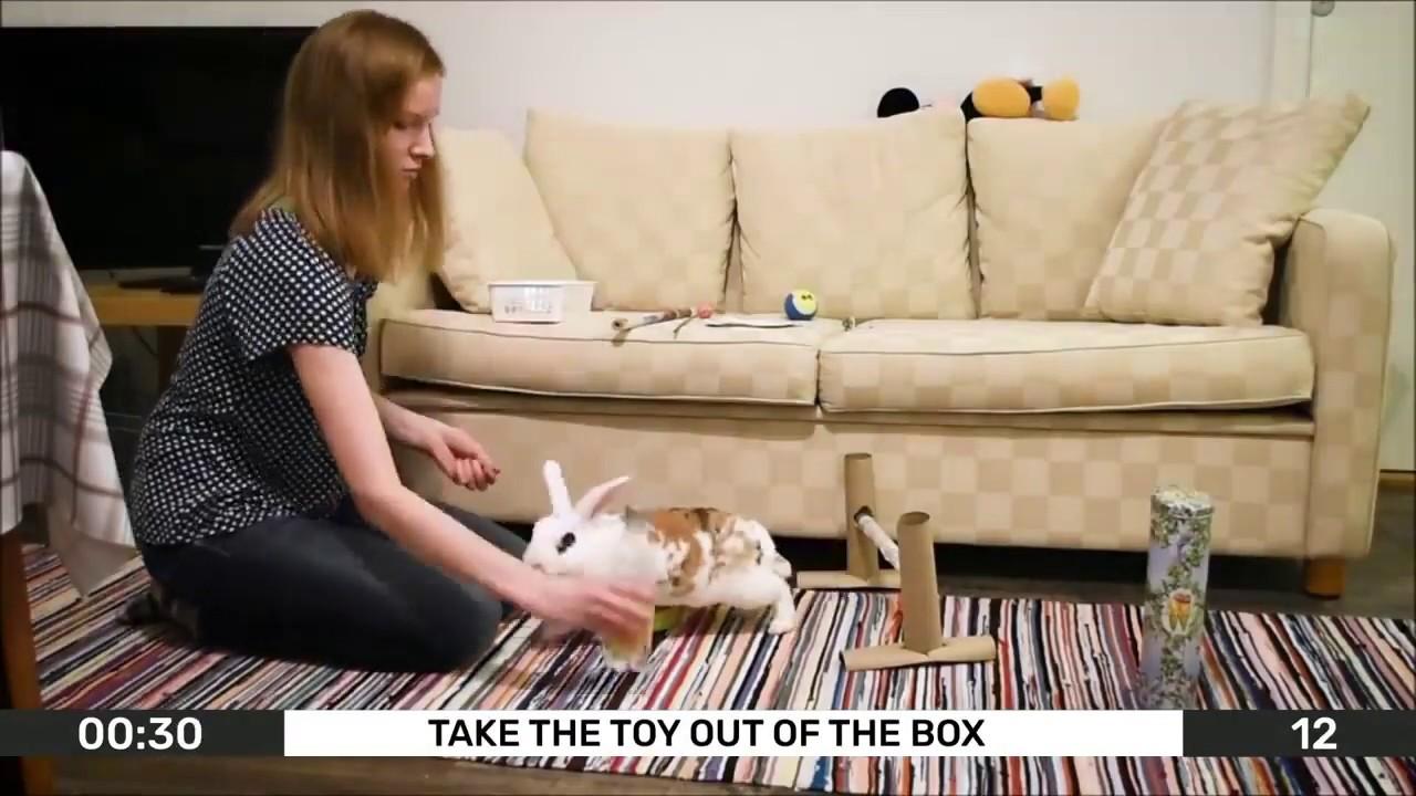 Самый умный кролик занесён в книгу Гиннеса