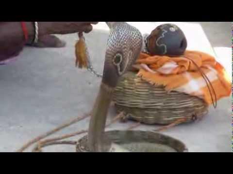 Snake Magudi