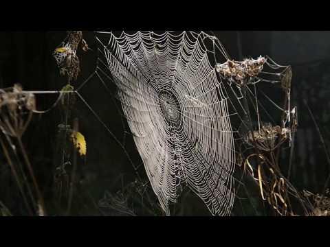 Почему пауки плетут паутину Интересные факты про паутину  Паутина и пауки