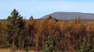 När naturen sjunger - jojk av Jon Henrik Fjällgren