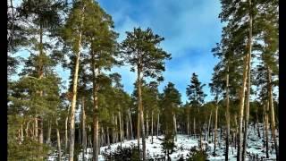 Природа сибири,Леса,животные.