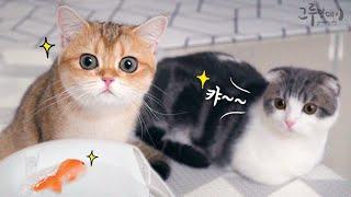 고양이랑 물놀이! 고양이 급수기 옹달샘 후기