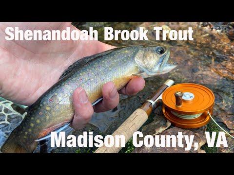 WB - Shenandoah Brook Trout, Madison County, VA - December '19