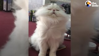 This Cat's Favorite Thing In The World Is Getting Blow-dried