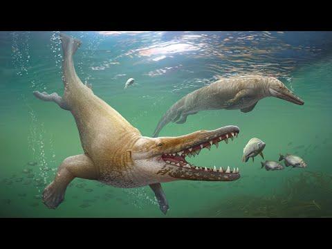 Эволюция китов и